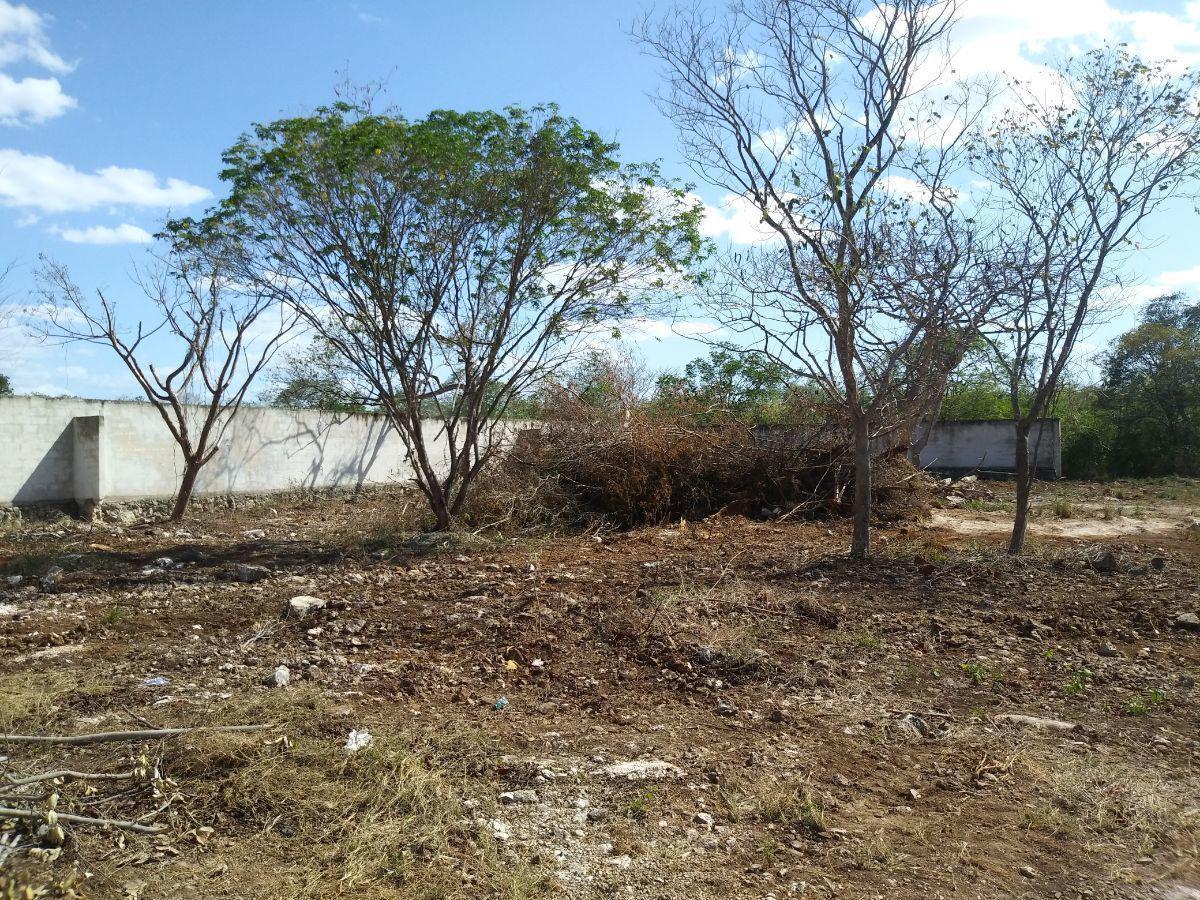 Foto Barrio Abierto en Pueblo Dzitya terrenos con servicios en dzitya,  al norte de mérida, con financiamiento  número 6