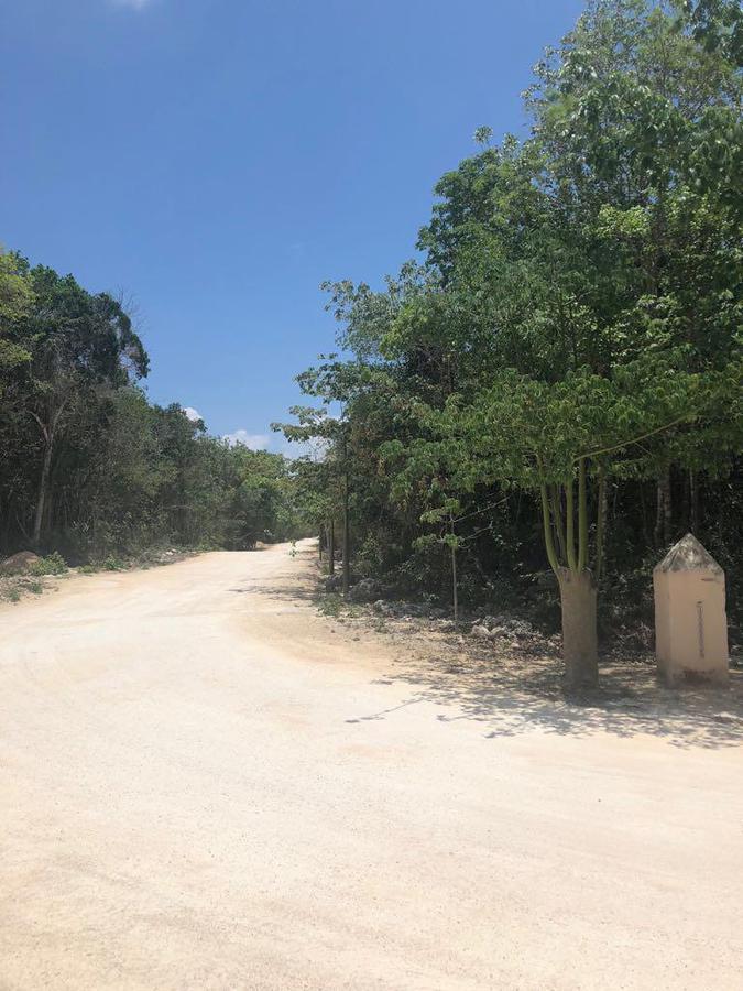Foto Terreno en Venta en  Ciudad Chemuyil,  Tulum          Chemuyil