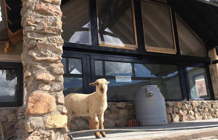 Foto  en Valle De Las Leñas TERRENO