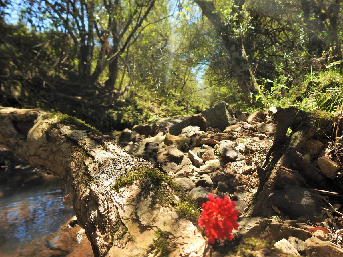 Foto Rural en Pueblo Edén Pueblo Eden número 17