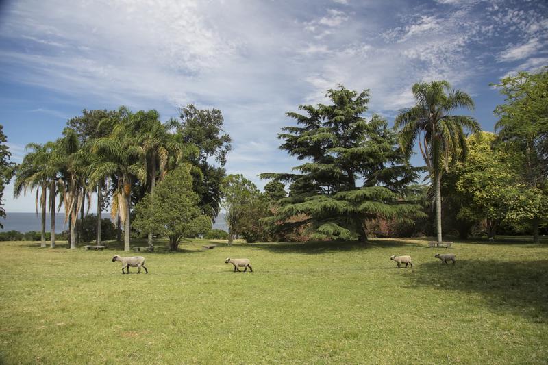 Foto  en Barrio Privado Camino Sanguinetti 5552