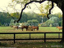 Foto Country en Estancia Benquerencia Estancia Benquerencia Farm Club - Ruta 41 km 22 San Miguel del Monte - Pcia. de Buenos Aires - Argentina número 7