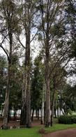 Foto Terreno en Venta en  León ,  Guanajuato  Terreno en Venta Residencial Bosque Azul facilidades de pago