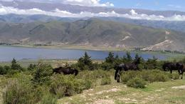 Foto Terreno en Venta en  Tafi Del Valle ,  Tucumán  AYRES DEL LAGO TAFI DEL VALLE LOTE 1800m2