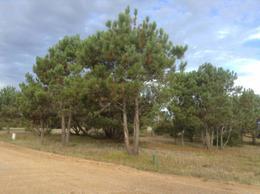 Foto Condominio Industrial en Capital Federal ruta 10, km 185 20402 número 1