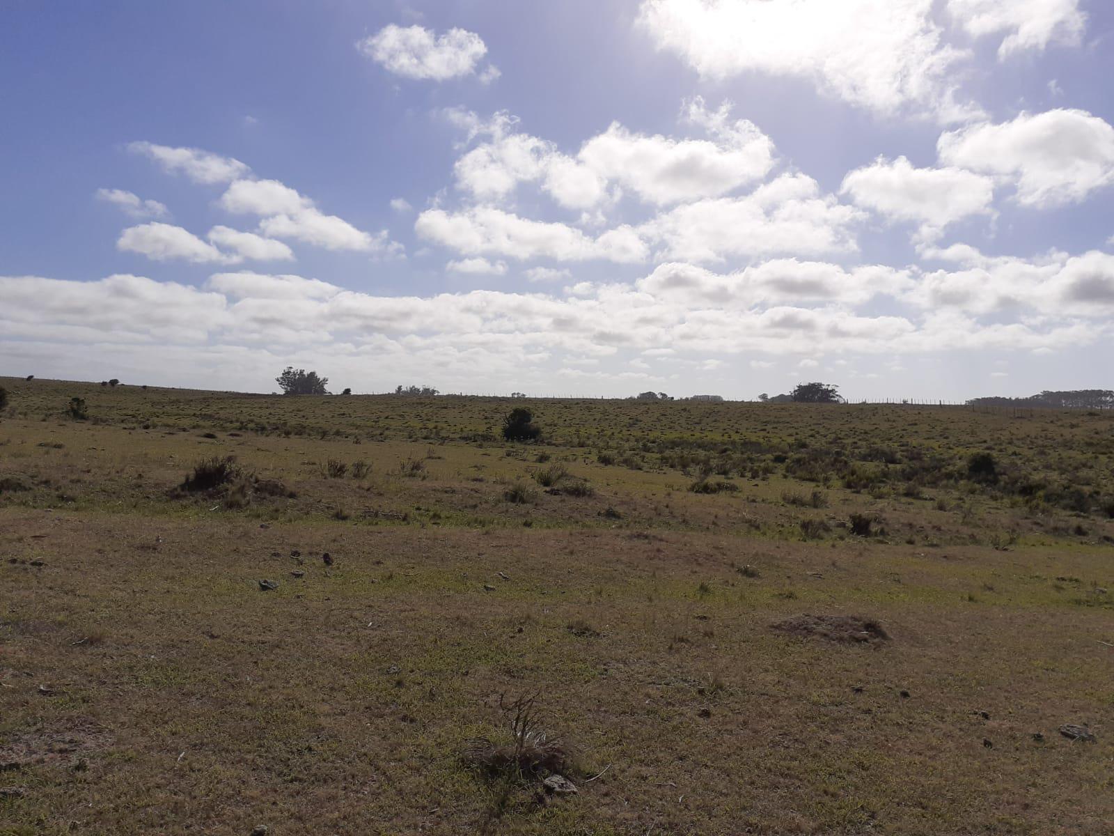 Terreno en Venta en Punta del Este Jos� Ignacio