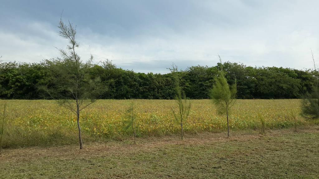 Foto Campo en Venta |  en  Villa Espil,  San Andres De Giles  Ruta 7 Km 92.6