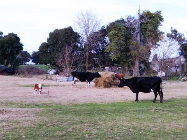 Foto Chacra en Venta en  Colonia del Sacramento ,  Colonia  Ruta 21 Paraje la Horqueta