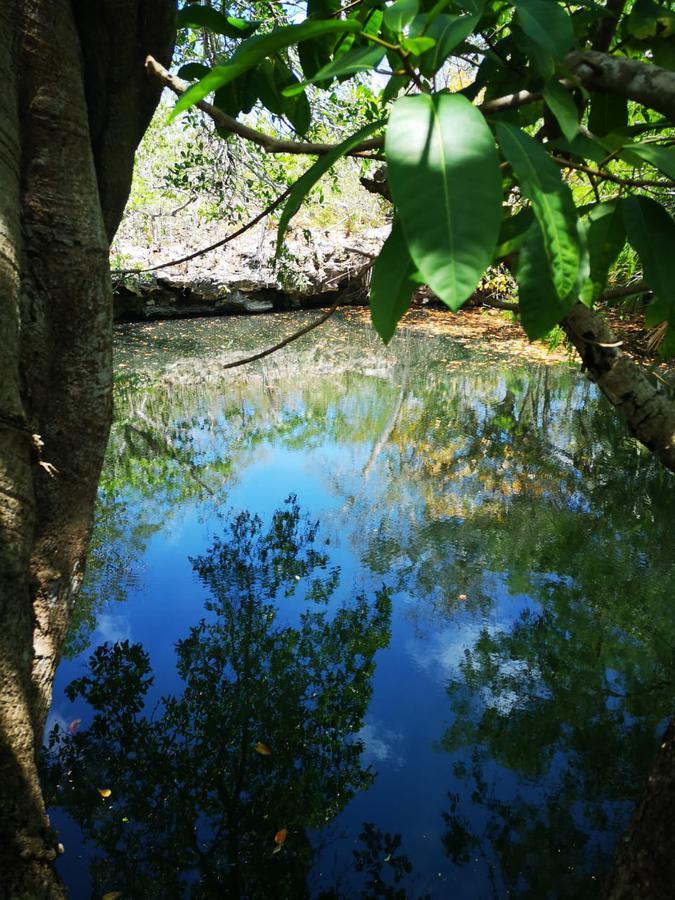 Foto Terreno en Venta en  Dzilam de Bravo ,  Yucatán  Rancho en venta en Yucatan