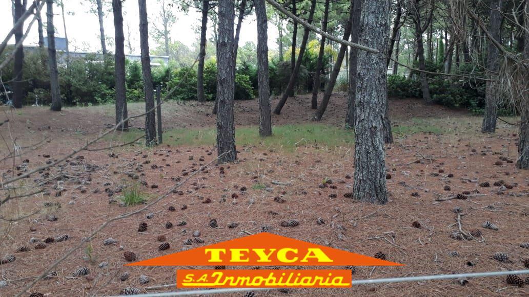 Foto Terreno en Venta en  Norte Playa,  Pinamar  SELENE E/POLIFEMO Y FTA. LA VICTORIA