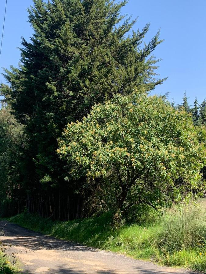 Foto Terreno en Venta en  Ejido la Campana,  Ocoyoacac  Ejido de San Martin , Cerro de la Campana