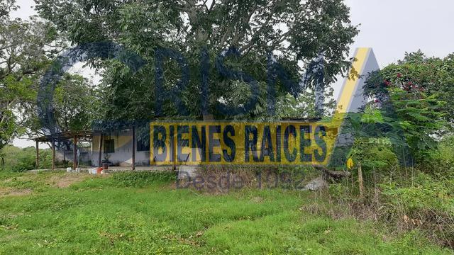 Foto Finca en Venta en  Pueblo Temapache,  Alamo Temapache  RANCHO TEMAPACHE SOBRE CARRETERA A TAMPICO