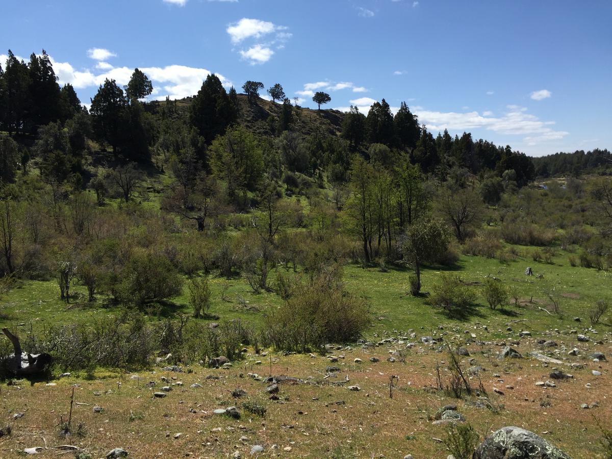 Foto Campo en Venta en  Cholila,  Cushamen  Lago Lezana