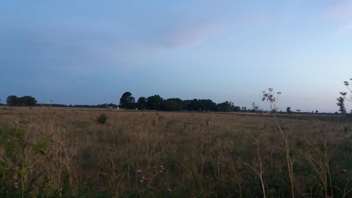Foto Campo en Venta en  Coronel Brandsen,  Coronel Brandsen  ruta al 200