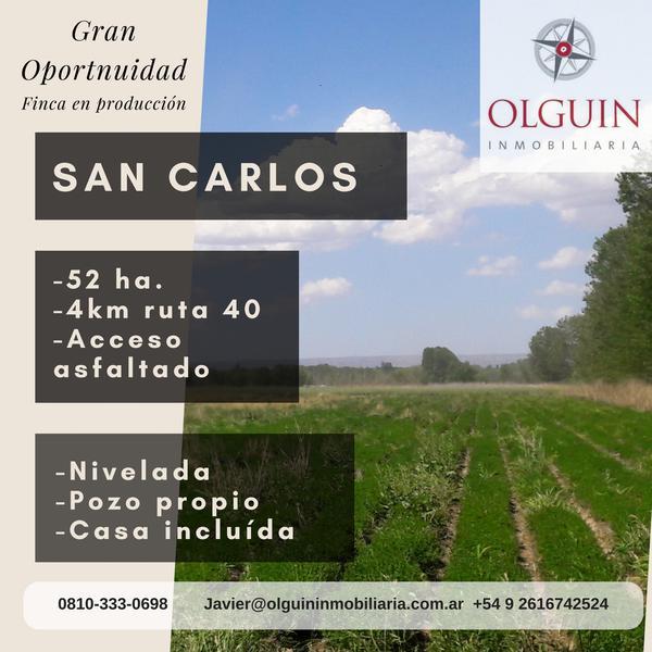 Foto Finca en Venta en  San Carlos ,  Mendoza  San Carlos