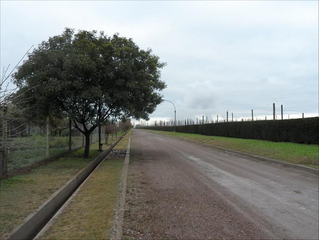 Foto Terreno en Venta en  Vistalba,  Lujan De Cuyo  El Envero - Vistalba