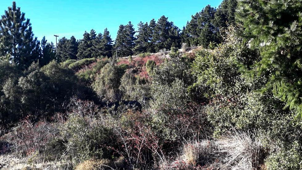 Foto Terreno en Venta en  Las Chacras,  San Carlos De Bariloche  Bo. Las Chacras