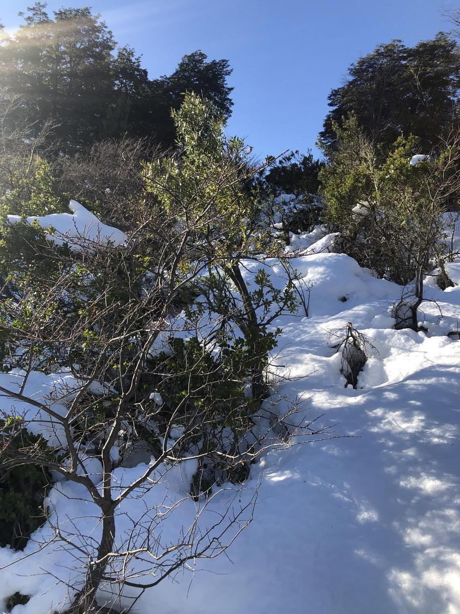 Foto Terreno en Venta en  Arelauquen,  Bariloche  Terreno en La Lomada