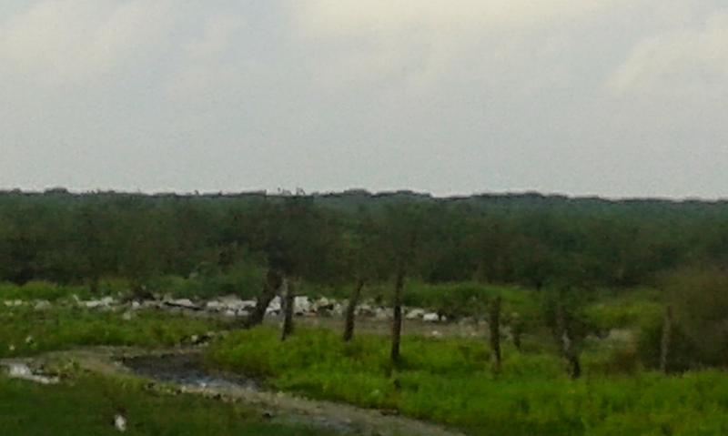 Foto Terreno en Venta en  Fraccionamiento Cumbres Animas,  Xalapa  Gran terreno urbano para desarrollo de vivienda en Pueblo Viejo, Ver (56 has)