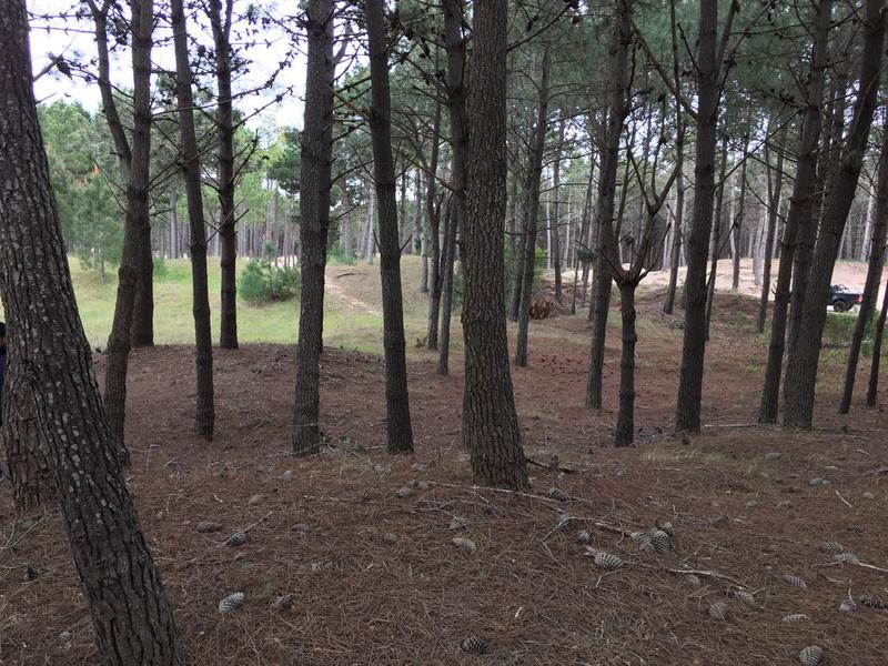 Foto Terreno en Venta en  Pinamar,  Pinamar  Boulevard Florentino Ameghino, Pinamar Norte