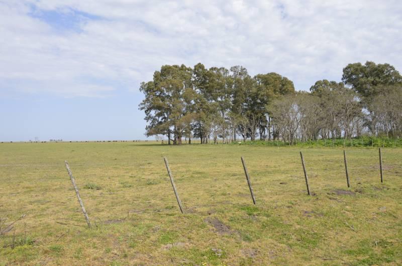Foto Campo en Venta en  General Belgrano,  General Belgrano  Campo zona La Verde  al 100