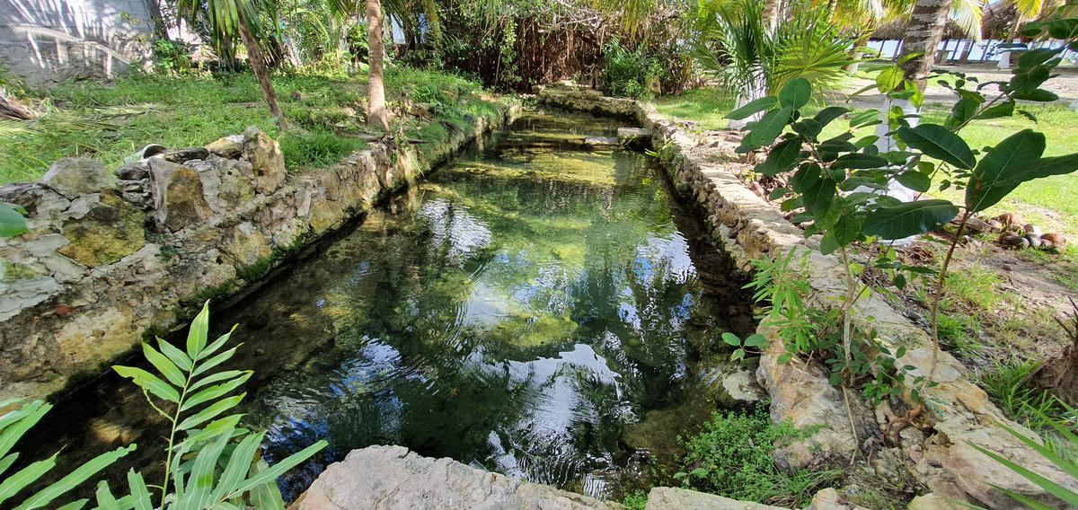 Foto Terreno en Venta en  Bacalar ,  Quintana Roo  Laguna Guerrero