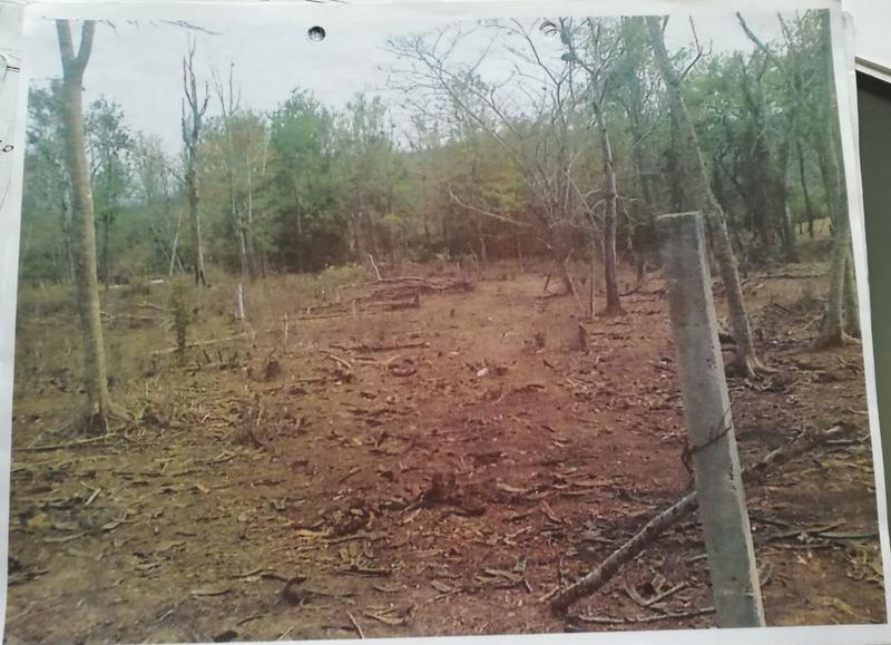 Foto Terreno en Venta en  Rancho o rancheria Plan Chico,  Emiliano Zapata  En venta excelentes terrenos campestres en La Hoya