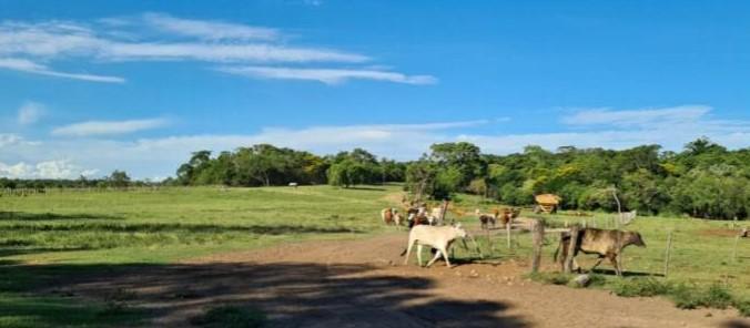 Foto Campo en Venta en  San Pedro del Paraná ,  Itapúa  Itapua, san pedro del Parana