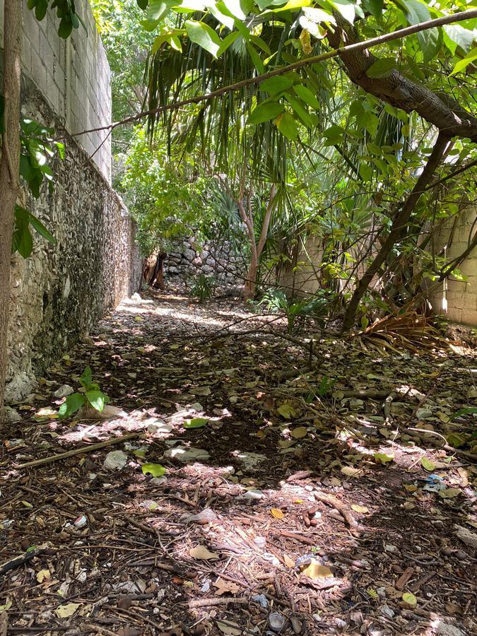 Foto Local en Renta en  Mérida Centro,  Mérida  Se renta local sobre calle 50, centro de merida, con alto flujocualquier negocio