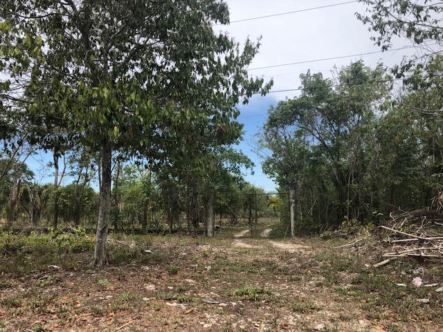Foto Terreno en Venta en  Leona Vicario,  Cancún  Terreno en VENTA sobre Carretera Federal Merida Cancun / Francisco May - Leona Vicario