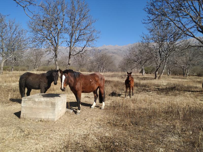 Foto Terreno en Venta en  Tafi Del Valle ,  Tucumán  Rodeo Grande