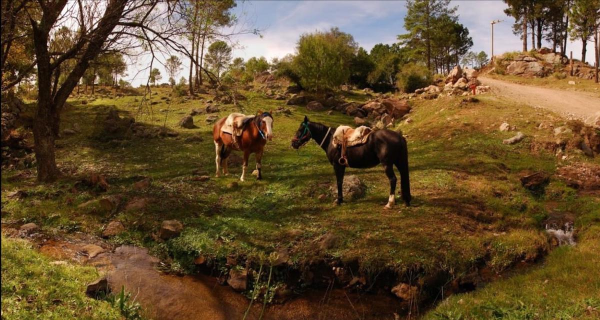 Foto Terreno en Venta en  Los Reartes,  Calamuchita  Los Reartes camino a La Cumbrecita