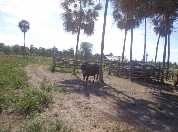 Foto Campo en Venta en  Benjamín Aceval ,  Presidente Hayes  Distrito de Benjamín Aceval - Dpto de Pdte Hayes