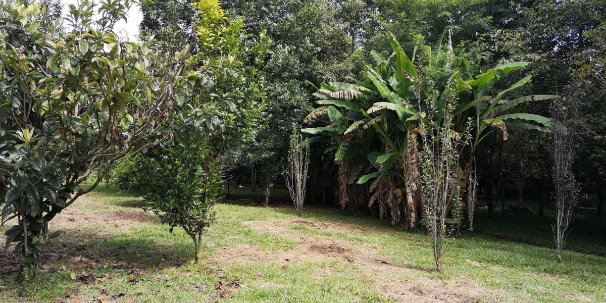 Foto Terreno en Venta en  Xico ,  Veracruz  Xico