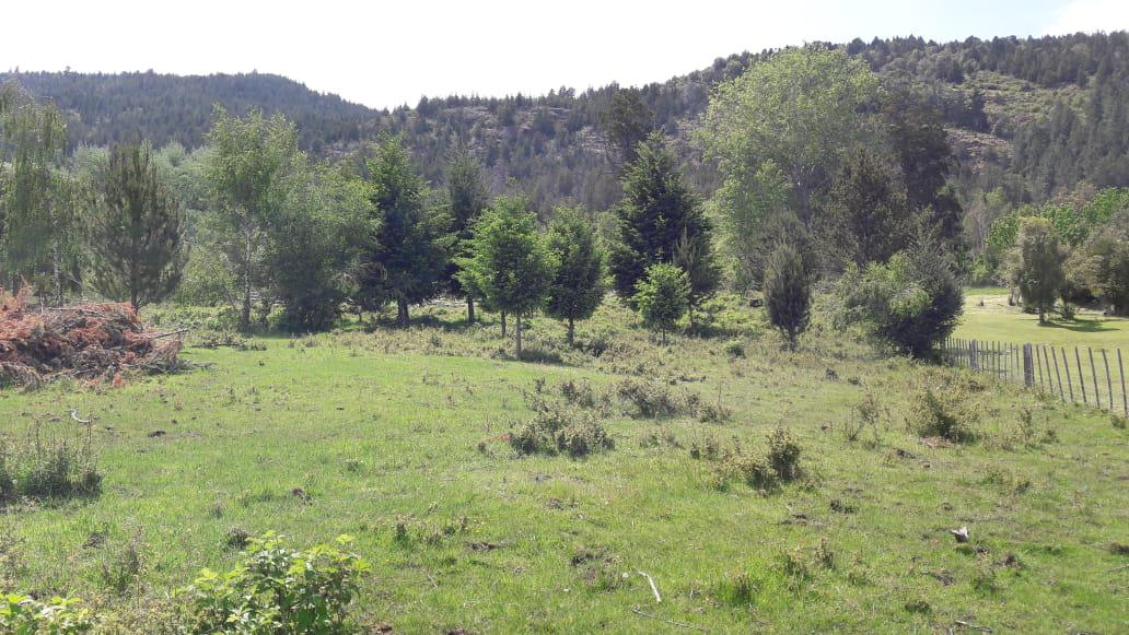 Foto Chacra en Venta en  Cerro Amigo,  El Bolson  RR3827