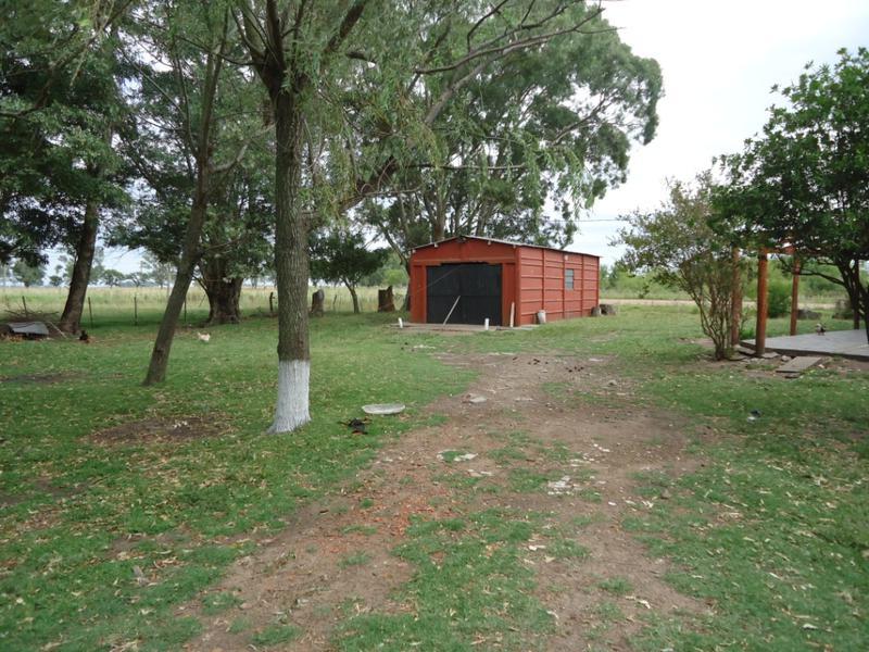 Foto Campo en Venta en  Las Flores,  Las Flores  Las Flores, sobre Ruta 91