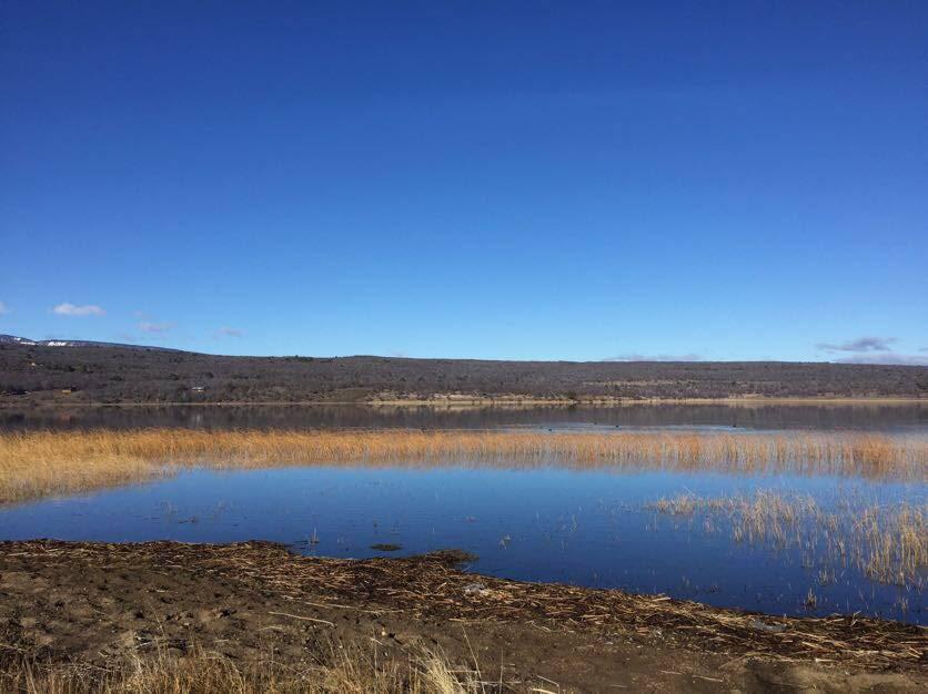 Foto Campo en Venta en  Lago Rosario,  Futaleufu  Lago Rosario