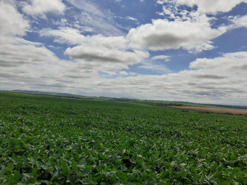 Foto Campo en Venta en  Katueté ,  Canindeyú  Canindeyu