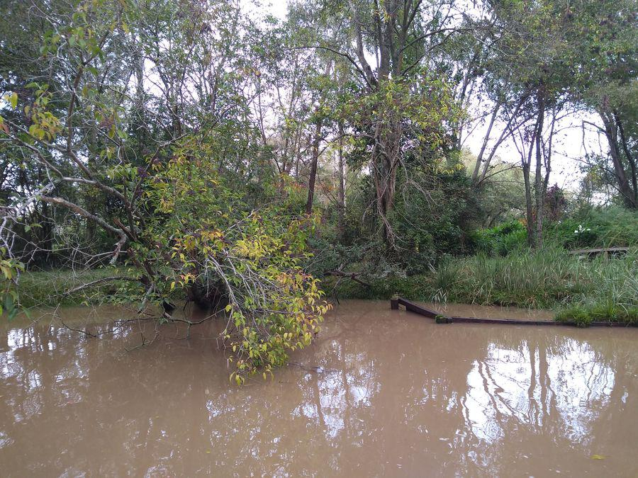 Foto Terreno en Venta en  Boraso,  Zona Delta Tigre  Boraso 2 Lotes juntos