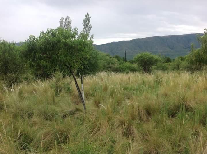 Foto Campo en Venta en  San Fco Del Monte De Oro,  Ayacucho  Ruta 146  s/n, San Francisco del Monte de Oro, San Luis. Campo de 22 hectareas. Apto para cultimo de aromáticas, olivos, nogales.