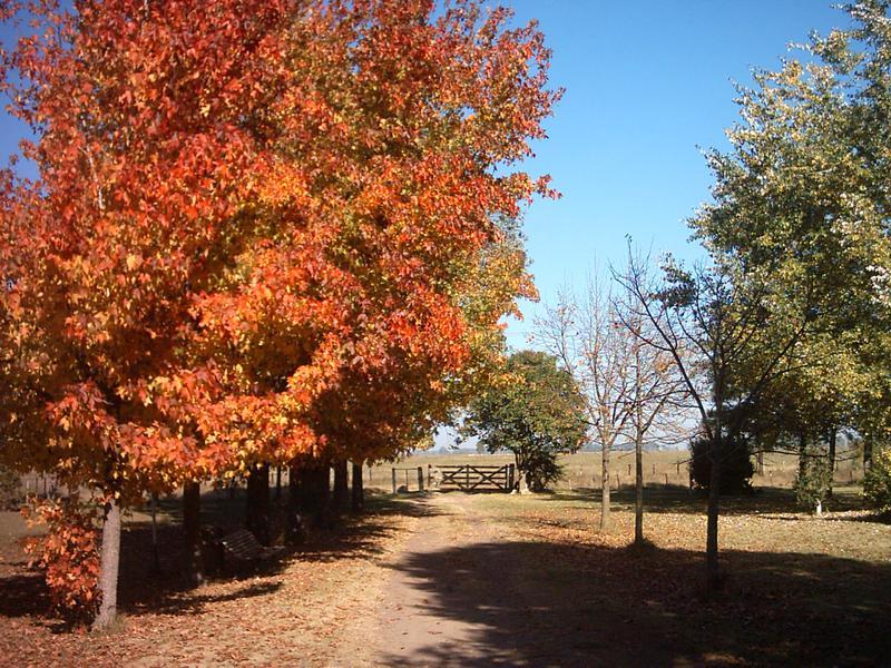 Foto Campo en Venta en  General Rodriguez ,  G.B.A. Zona Oeste  Ruta 47
