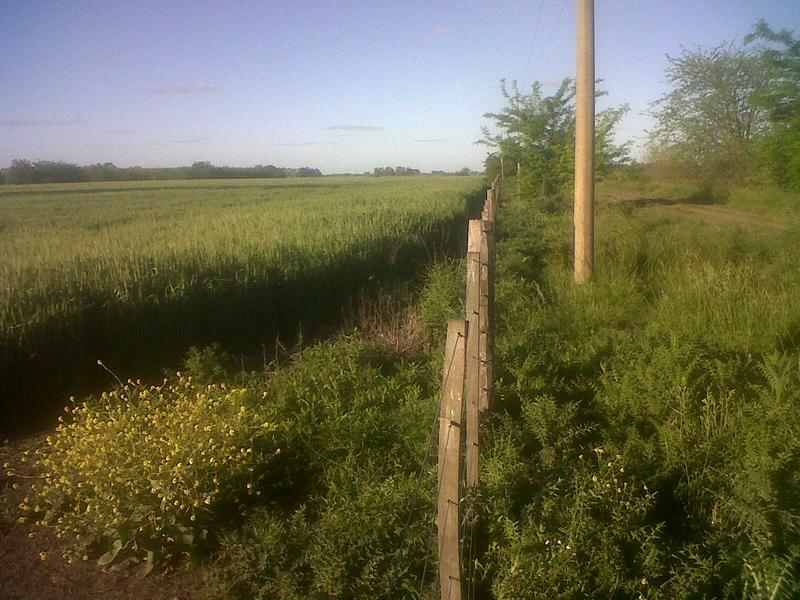 Foto Campo en Venta en  Lobos,  Lobos  Lobos, a 6km de R41 y 10km de ciudad