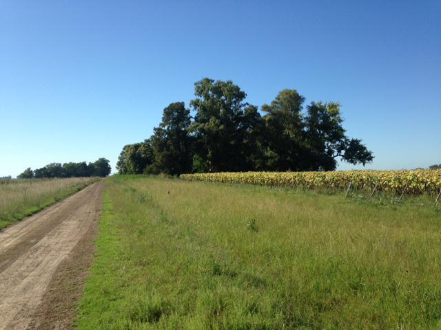 Foto Campo en Venta en  Las Flores,  Las Flores  A 7 km de la ciudad de Las Flores