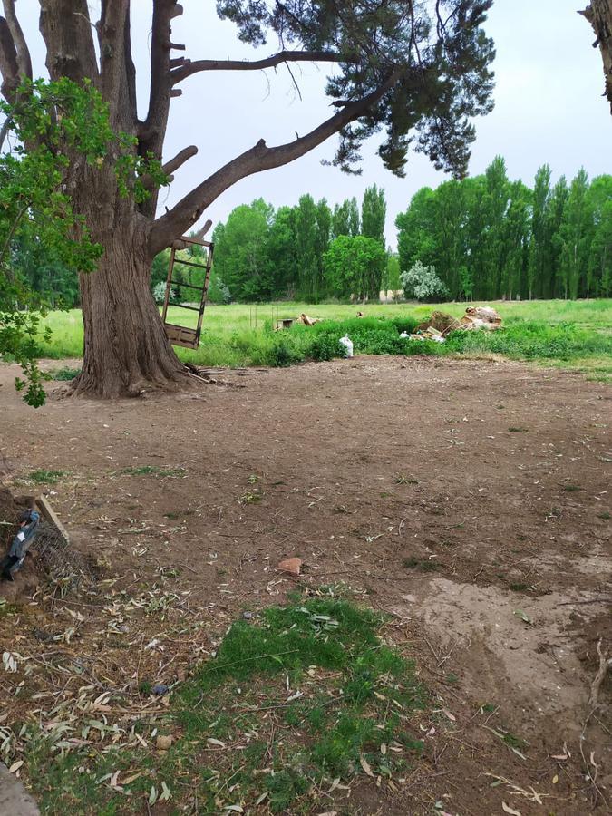 Foto Campo en Venta en  Cipolletti,  General Roca  cipolletti rio negro