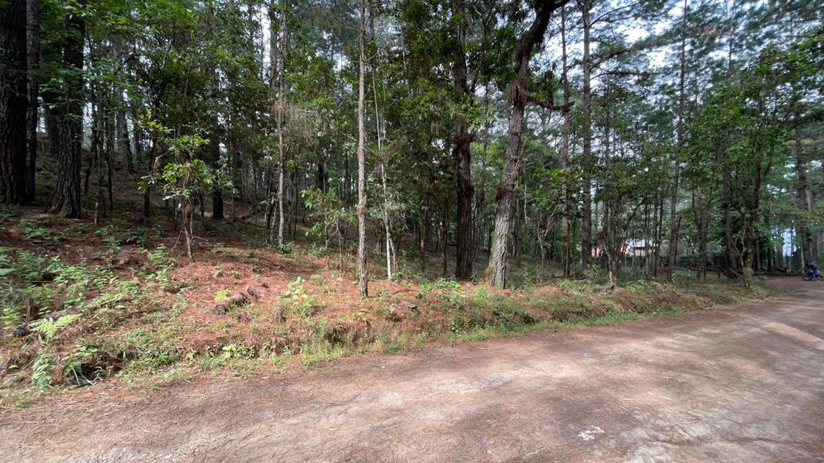 Foto Terreno en Venta en  El Trigo,  Tegucigalpa  Terreno Ideal para Casa de campo, El Trigo, Tegucigalpa