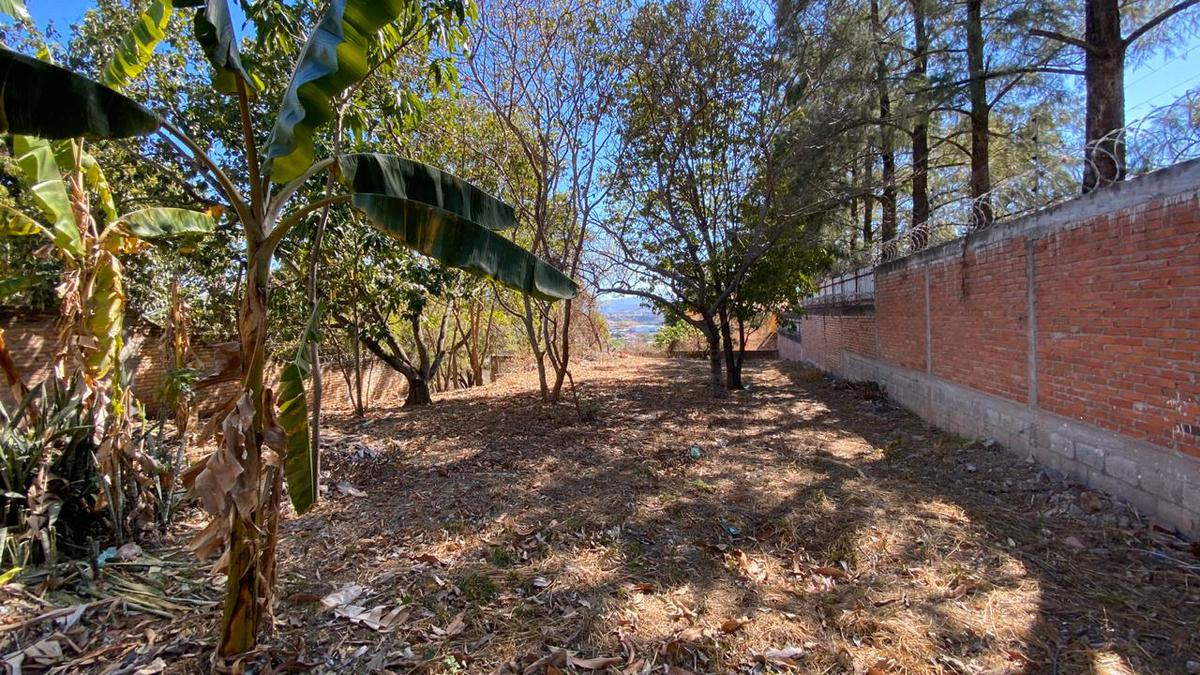 Foto Terreno en Venta en  Loma Linda Norte,  Tegucigalpa  TERRENO RESIDENCIAL EN VENTA, LOMA LINDA NORTE, TEGUCIGALPA