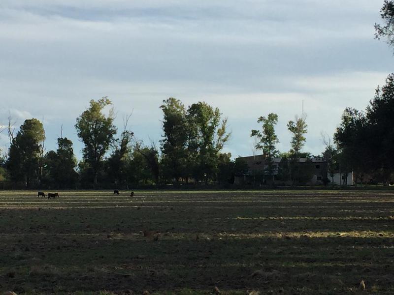 Foto Campo en Venta en  San Javier ,  Cordoba  A 15 km de Villa Dolores s/ R20
