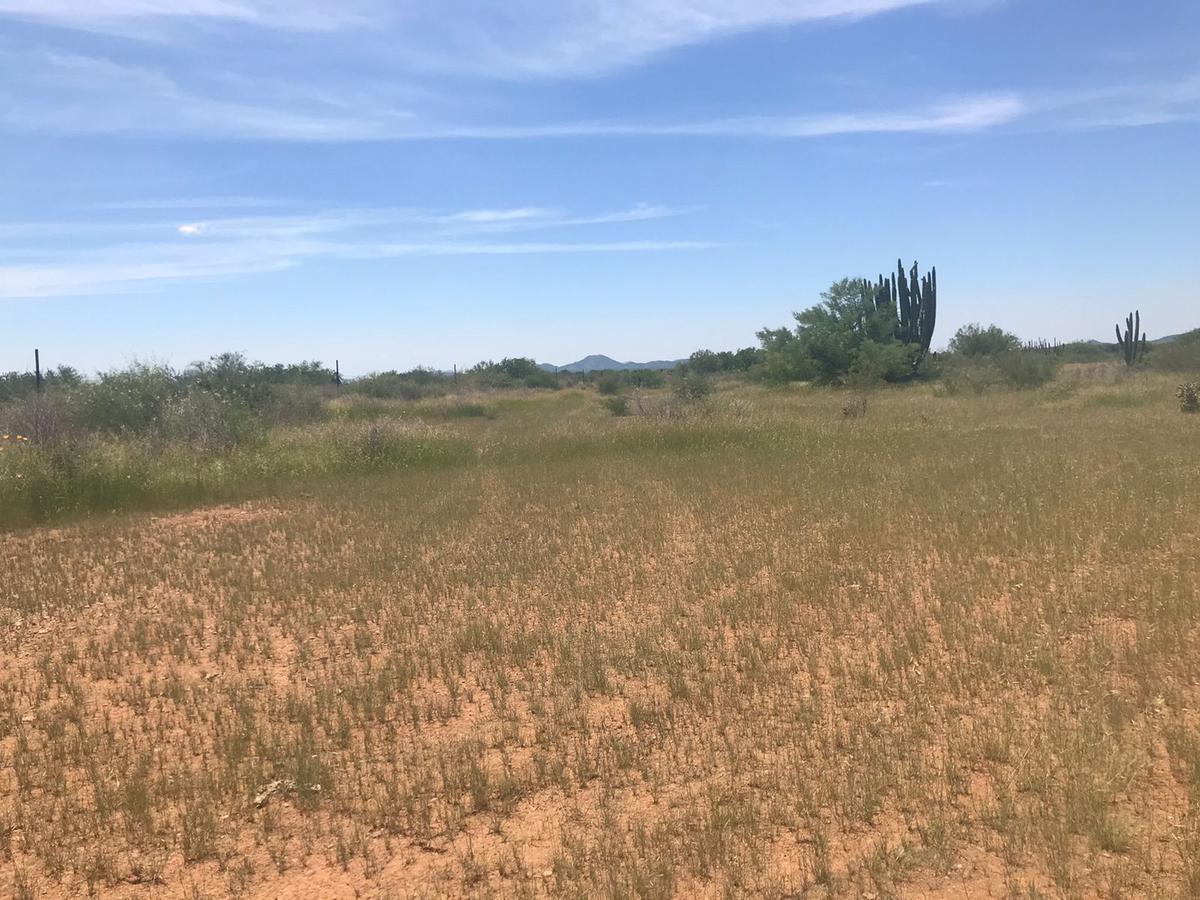 Foto Terreno en Venta en  Parque industrial Parque Industrial,  Hermosillo  TERRENO AGRICOLA EN VENTA RUMBO A LA COLORADA KM  9
