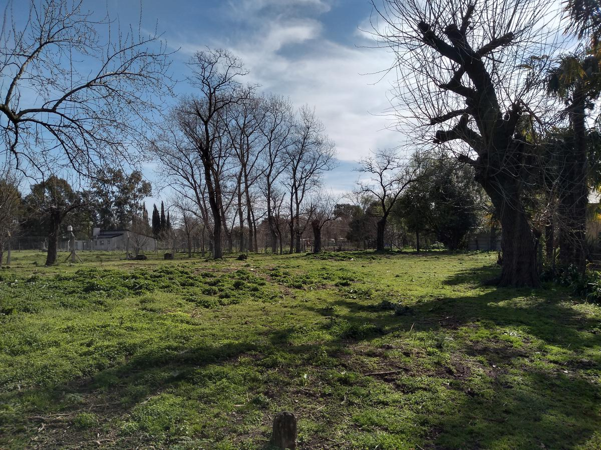 Foto Terreno en Venta en  Meneses,  General Belgrano  Lavalle casi esquina 68