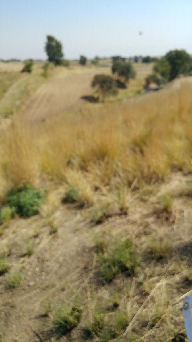 Foto Terreno en Renta en  San Juan Tilapa Centro,  Toluca  TERRENO EN RENTA EN CARRETERA SAN JUAN TILAPA  ZACANGO, TOLUCA, ESTADO DE MÉXICO
